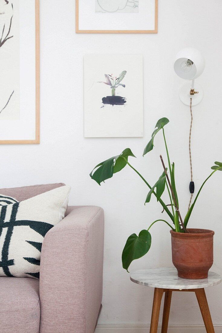 Plant on round side table next to sofa