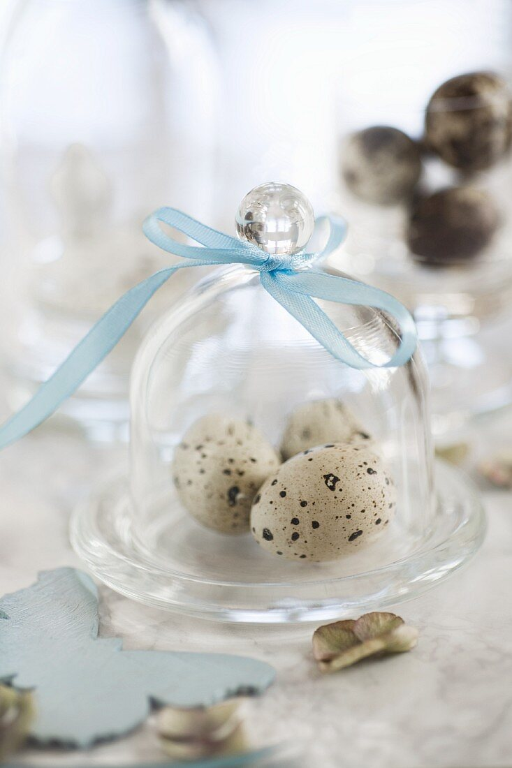 Quail's eggs under a glass cloche with a ribbon on a marble surface