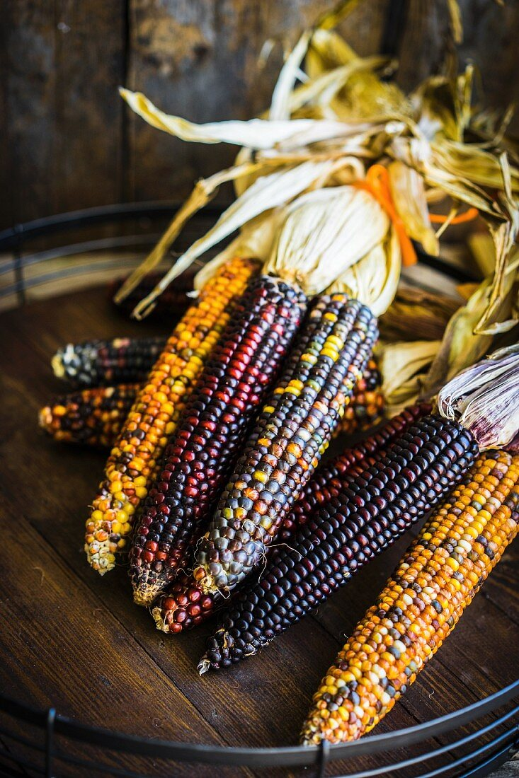 Multicolored maize on rustic wooden surface
