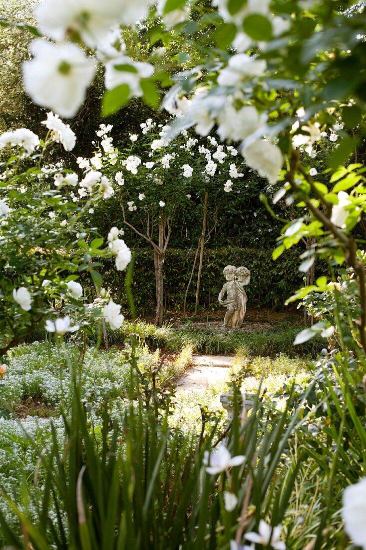 Blick durch rankende Schneewittchen Rosen (Iceberg) auf klassische Steinfigur in parkähnlichem Garten