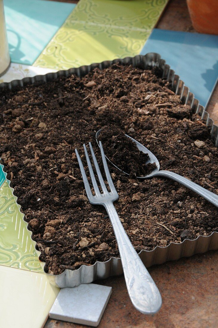 Vintage kitchen implement such as baking tray and cutlery being used as gardening tools