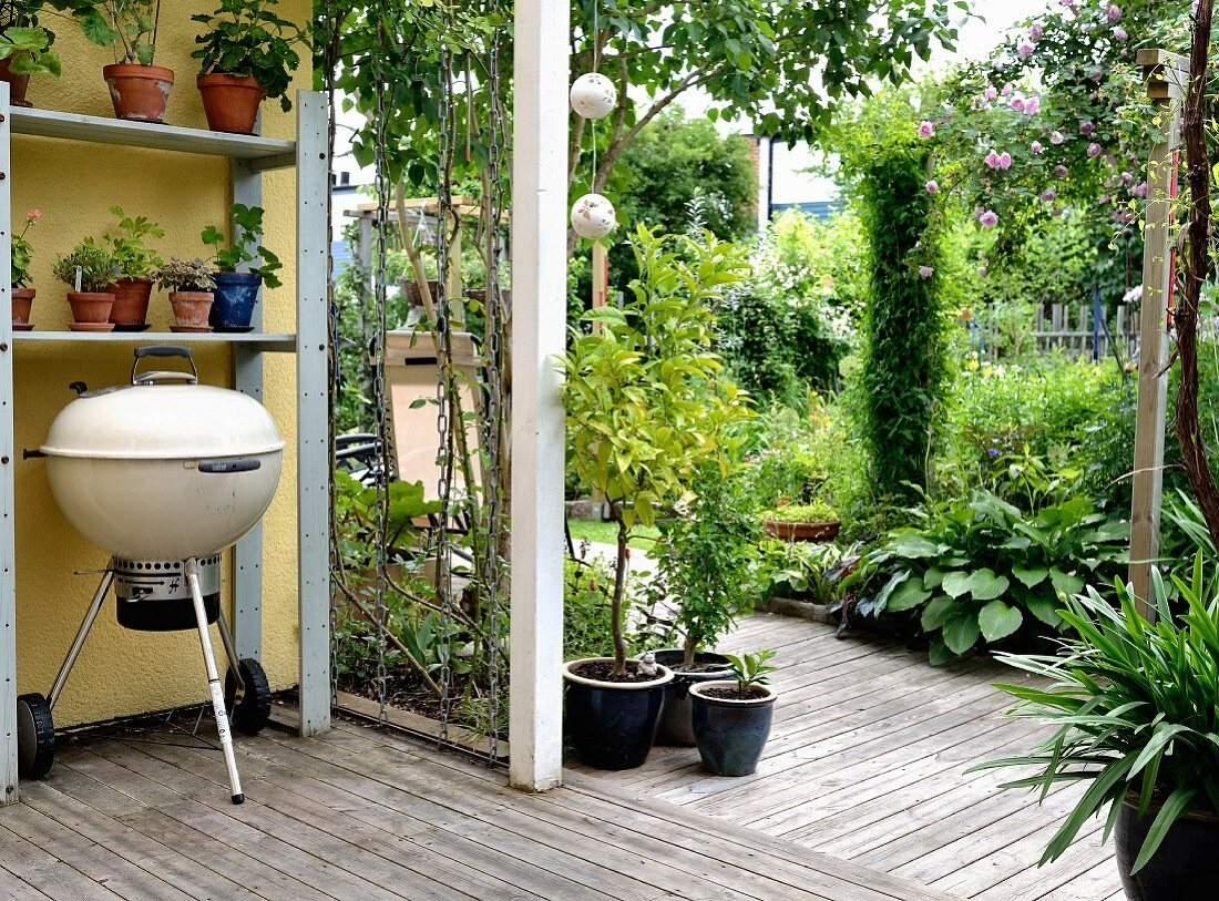 Kettle grill and potted plants on shelves on veranda with wooden floor and view into summery garden