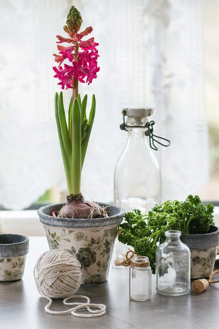 Hyacinth, herbs, bottles and ball of yarn on kitchen table
