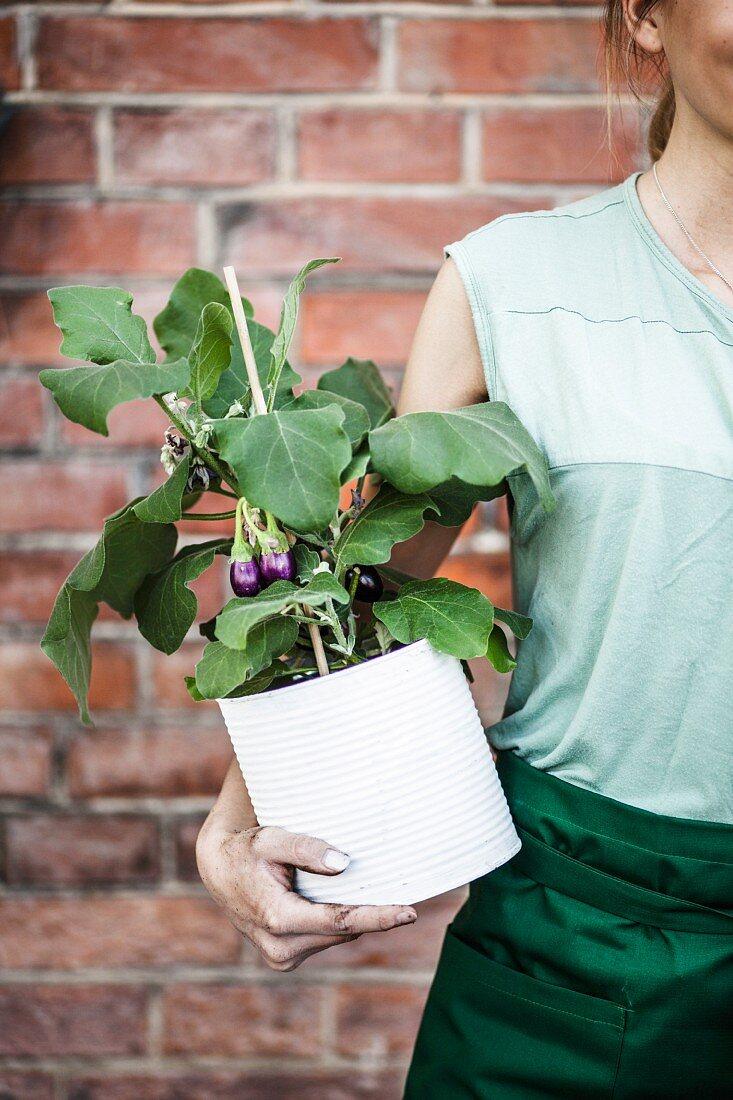 Frau hält Konservendose mit Auberginenpflanze in der Hand