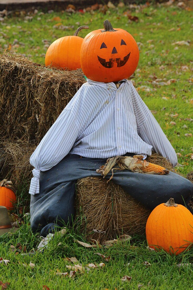 Pumpkin scarecrow wearing shirt and trousers sitting on hay bale