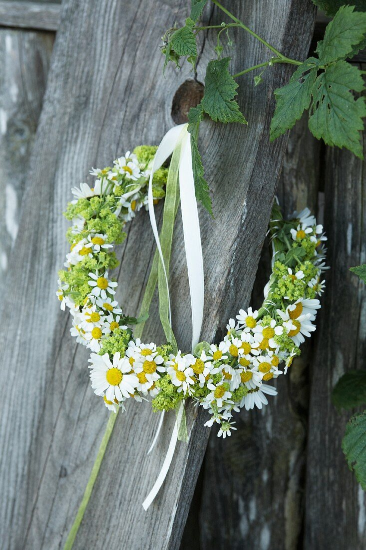 Wild-flower wreath of ox-eye daisies, chamomile and lady's mantle decorated with ribbons on wooden board