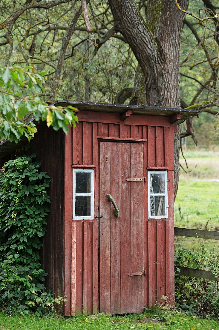 Old, wooden toilet outhouse painted Falu red hidden between bush and tree in garden