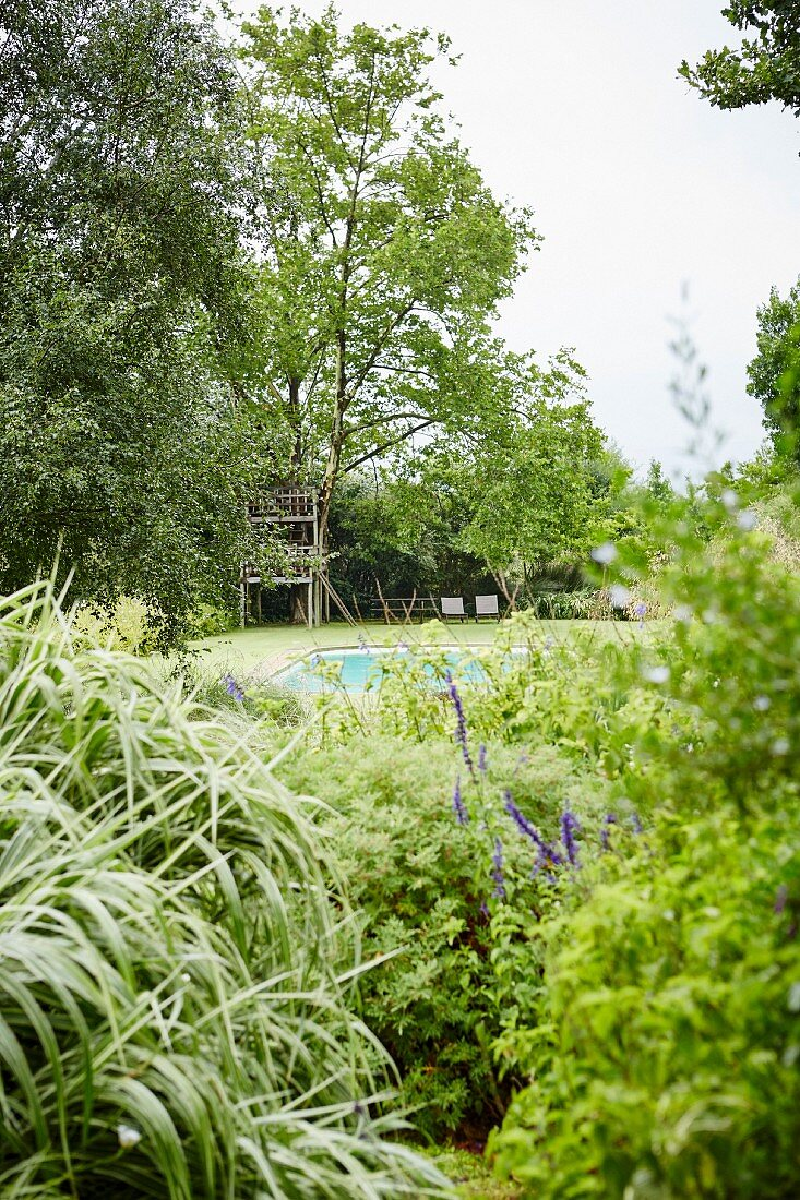Detail of garden with view of pool and tree house