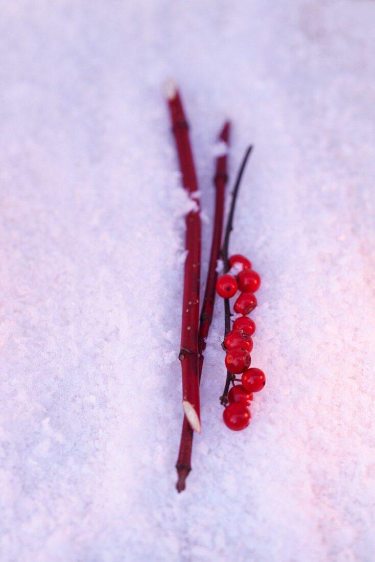 Ilexbeerenzweig & rote Hartriegelzweige im Schnee