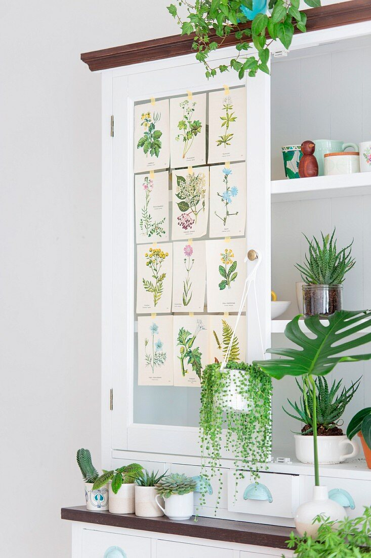 Various foliage plants on white kitchen dresser decorated with botanical illustrations