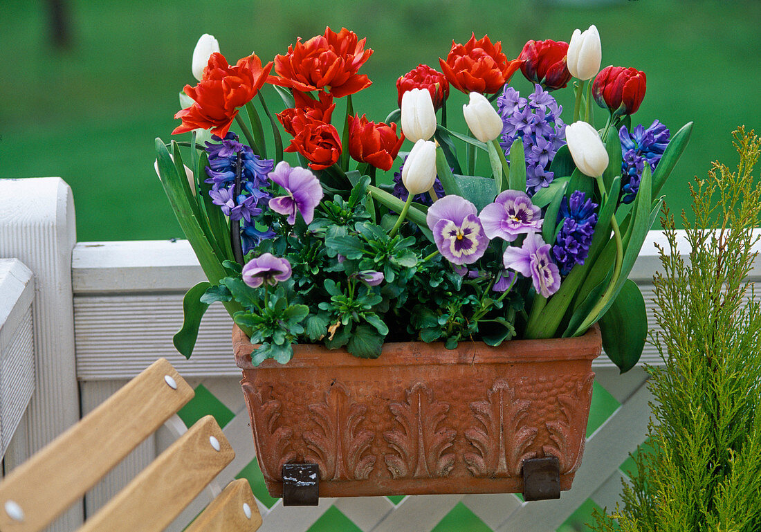 Box with tulips, hyacinths, pansies