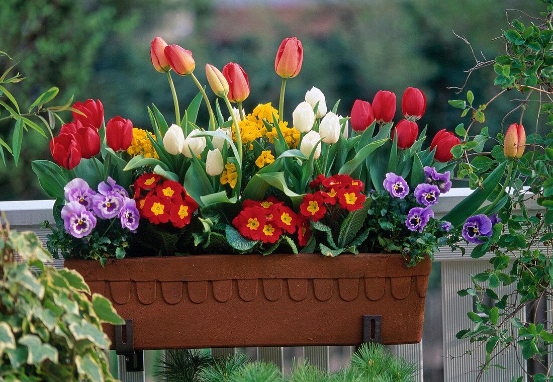 Tulips, Primula, Viola, Erysimum (gold lacquer)
