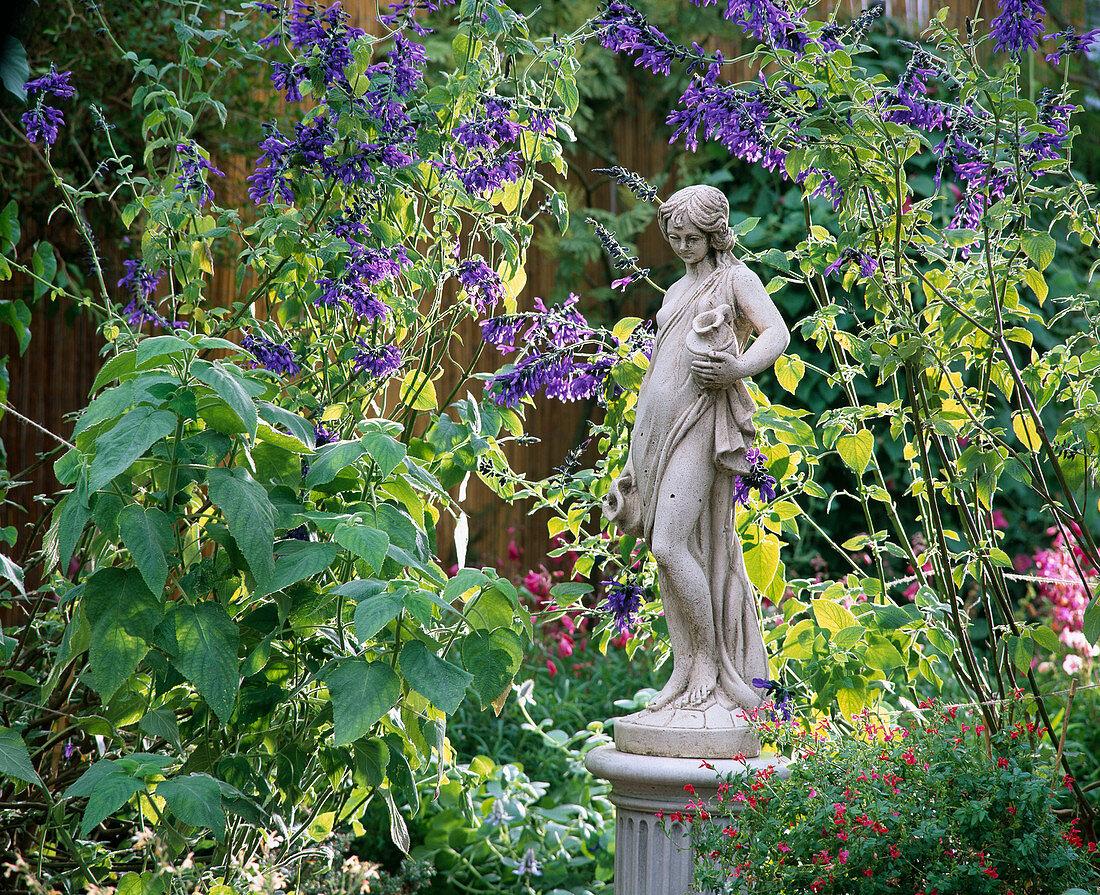 Salvia guaranitica 'Blue Enigma', Salvia dorisiana