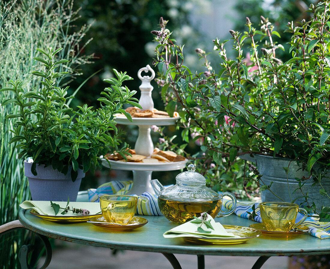Mentha piperita (peppermint), peppermint tea