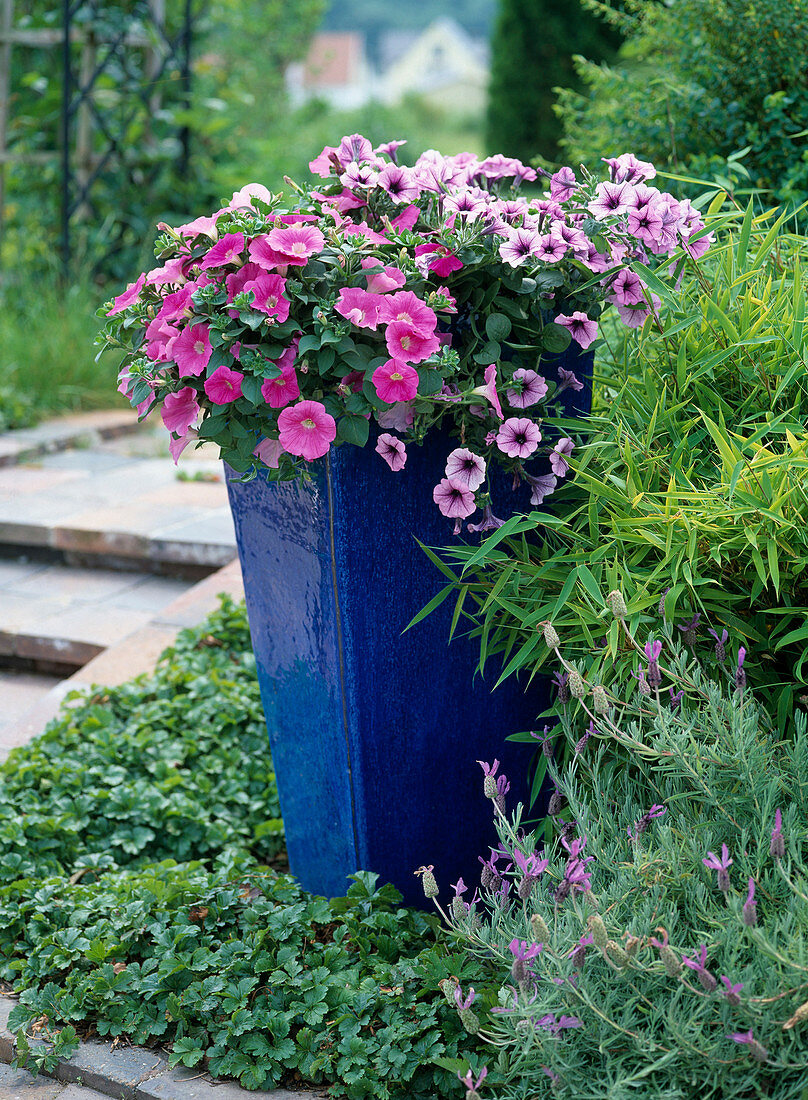 Pot with replanting