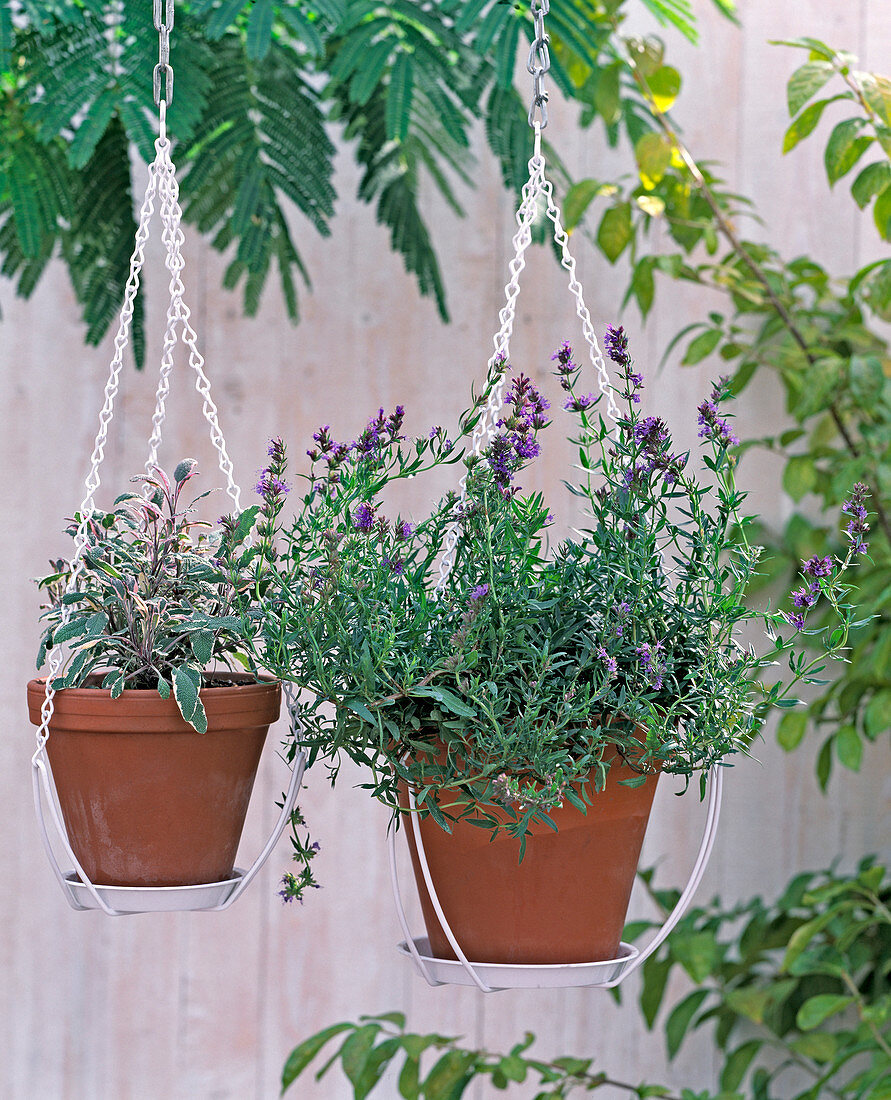 Ceiling mounts for hanging baskets