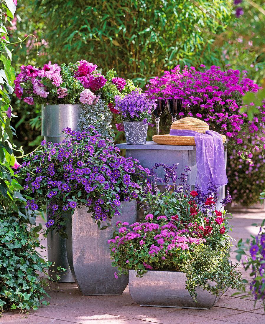 Petunia grandiflora 'Wimbledon Mix' and 'Flash Veinned Formula'