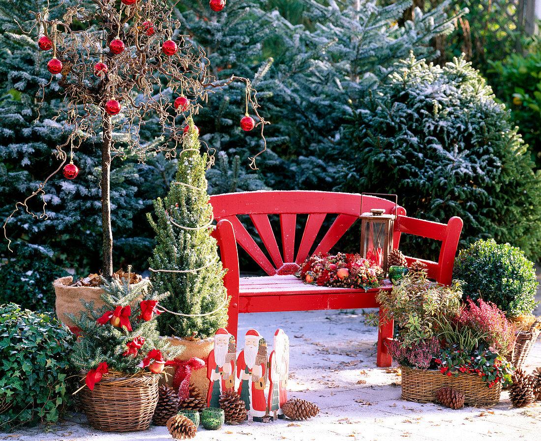 Christmas Terrace Corylus avellana 'Contorta' Corkscrew Hazel, Picea glauca