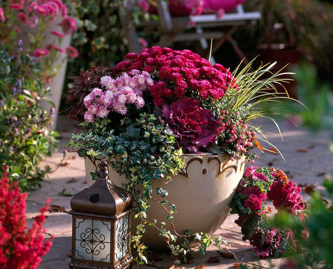Chrysanthemum pot