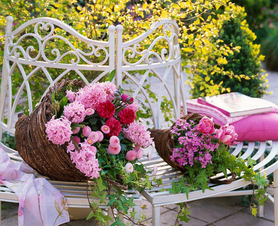 Hyacinthus (pink hyacinth), Bellis (thousand beautiful)