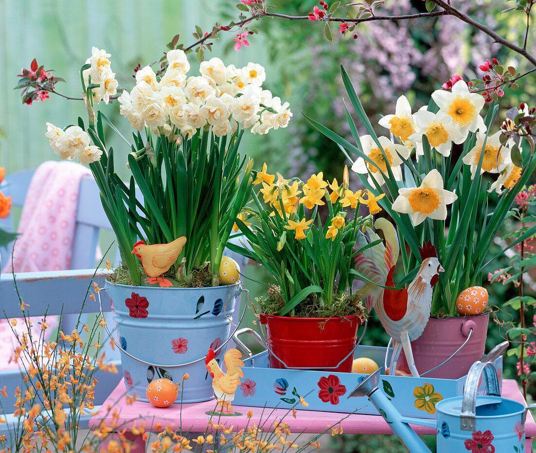 Narcissus 'Bridal Crown' - 'Tete à Tete' - 'Flower Record'
