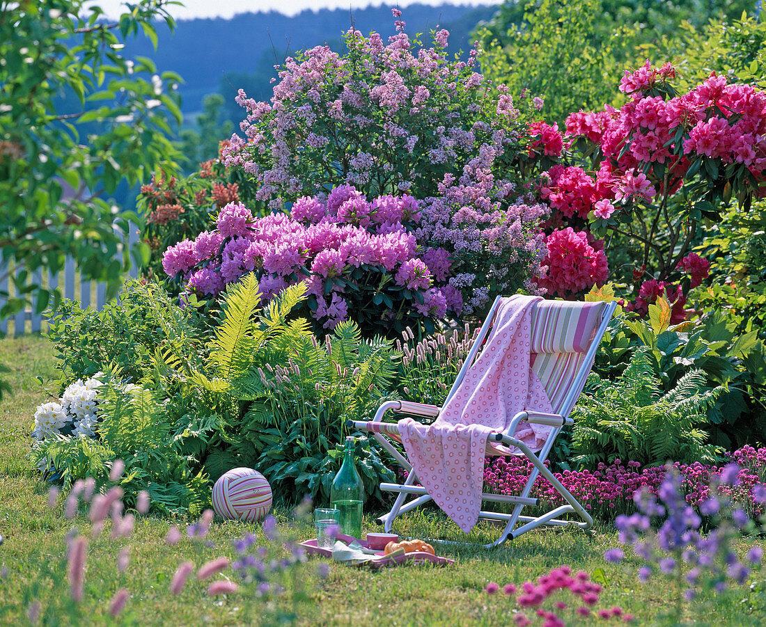 Rhododendron, Syringa (dwarf lilac)