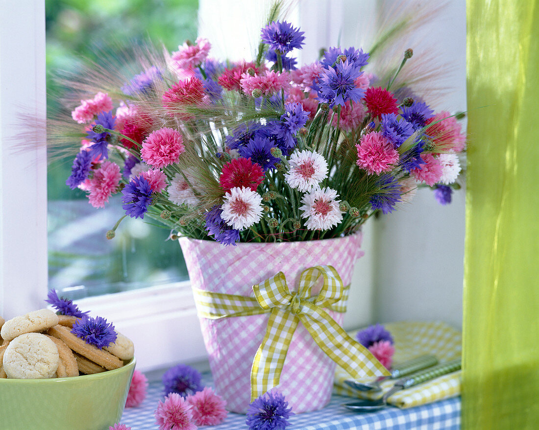 Centaurea (cornflowers)
