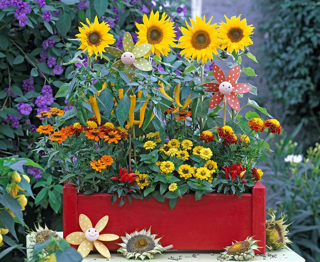 Helianthus 'Big Smile' (Sunflower)