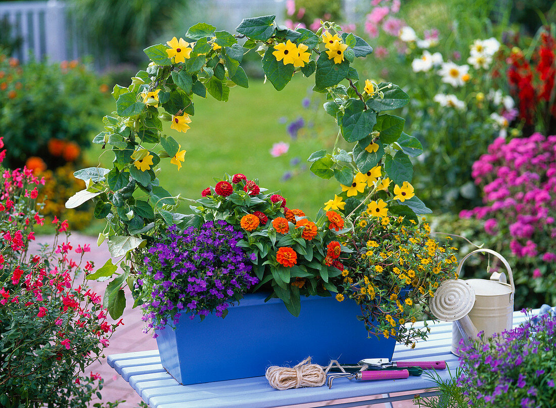 Plant box colorfully
