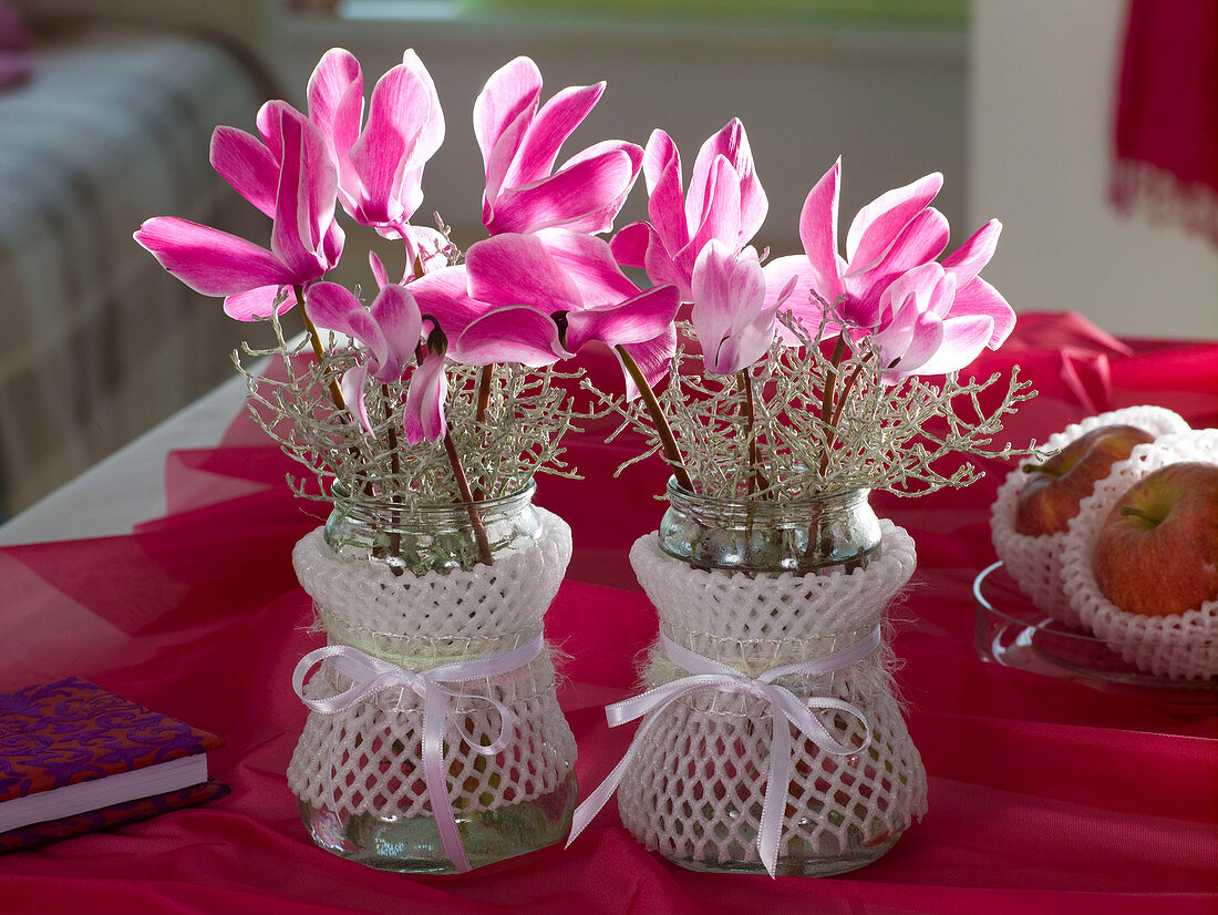 Cyclamen and Calocephalus in small glasses with abdominal ligaments