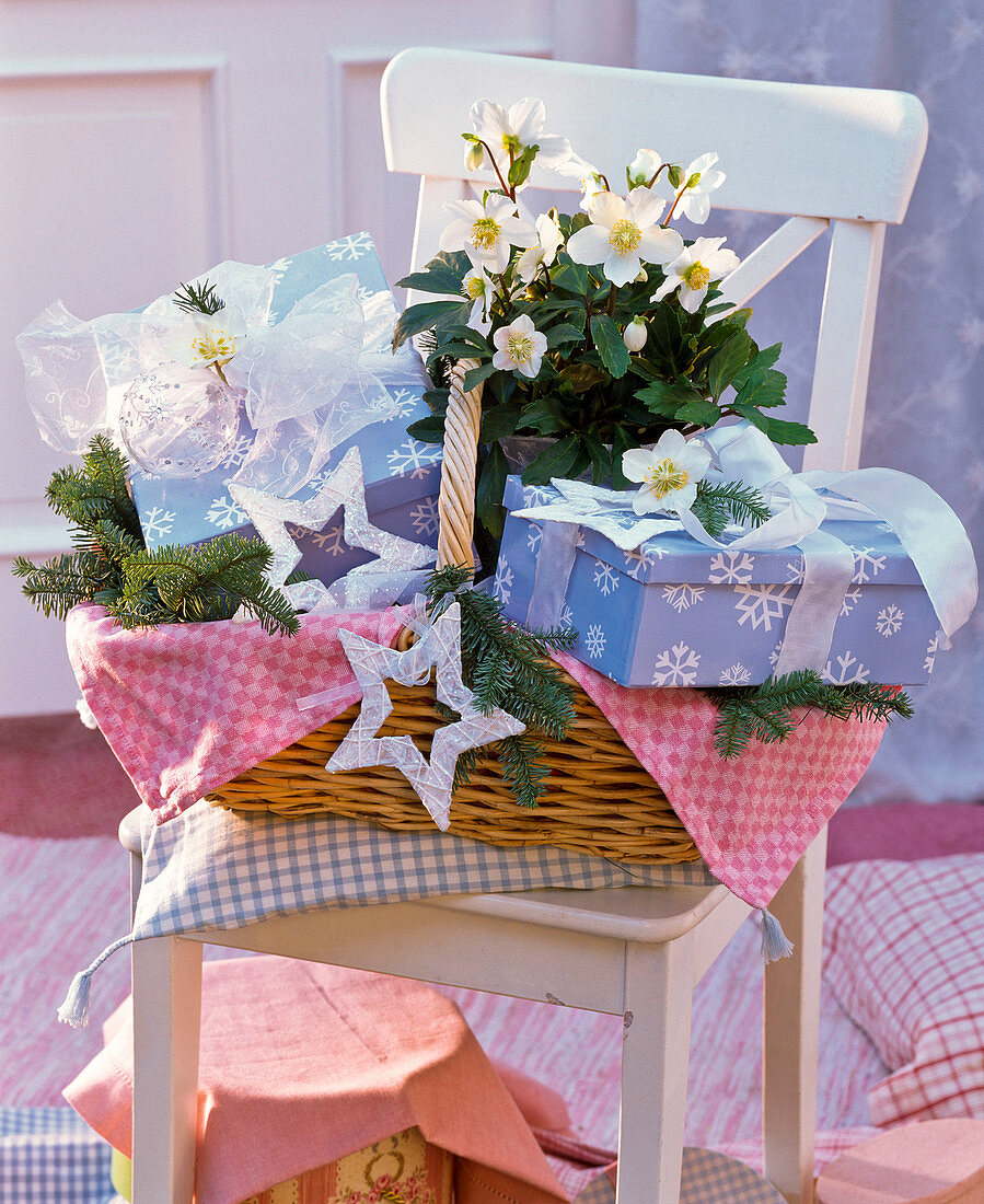 Helleborus in basket with gifts, stars and Abies branches