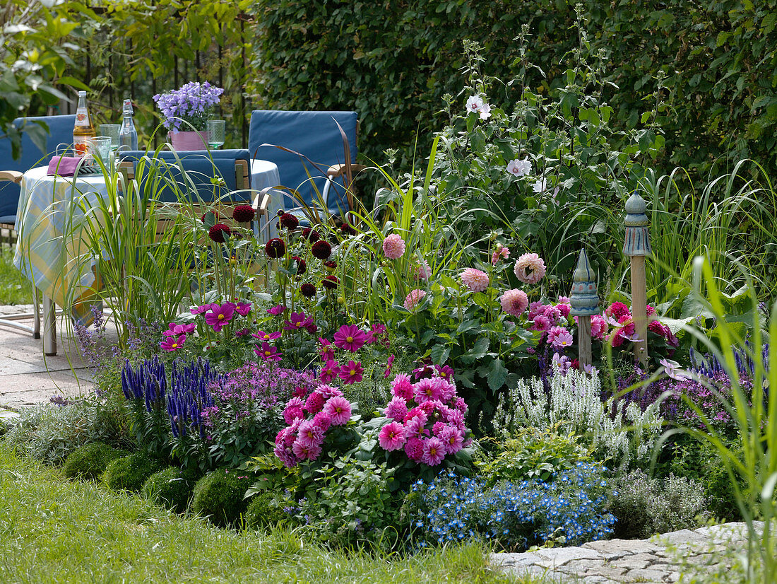 Colorful summer bed with Dahlia 'Black Diamond'