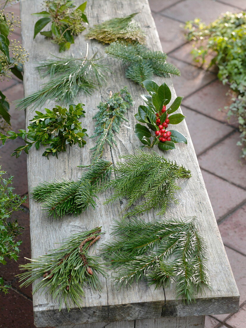 Branches of various woody plants for the Christmas and winter floristry