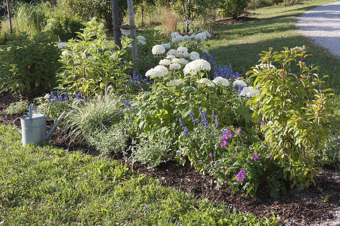 Plant the bed with shrub hydrangeas