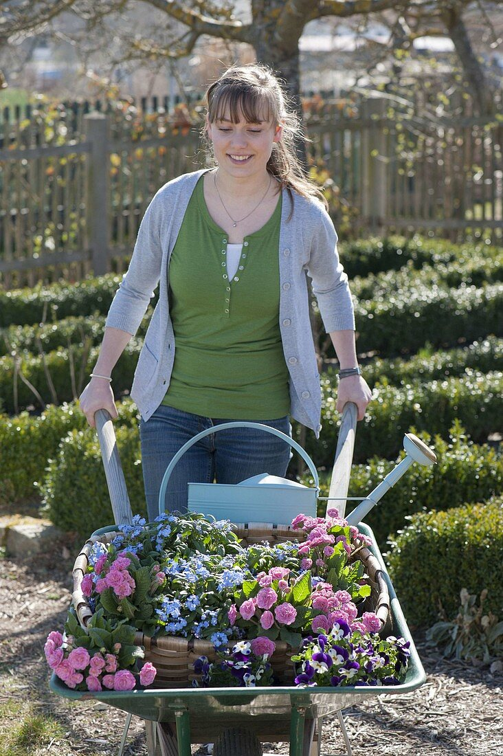 Woman with wheelbarrow full of spring flowers for planting