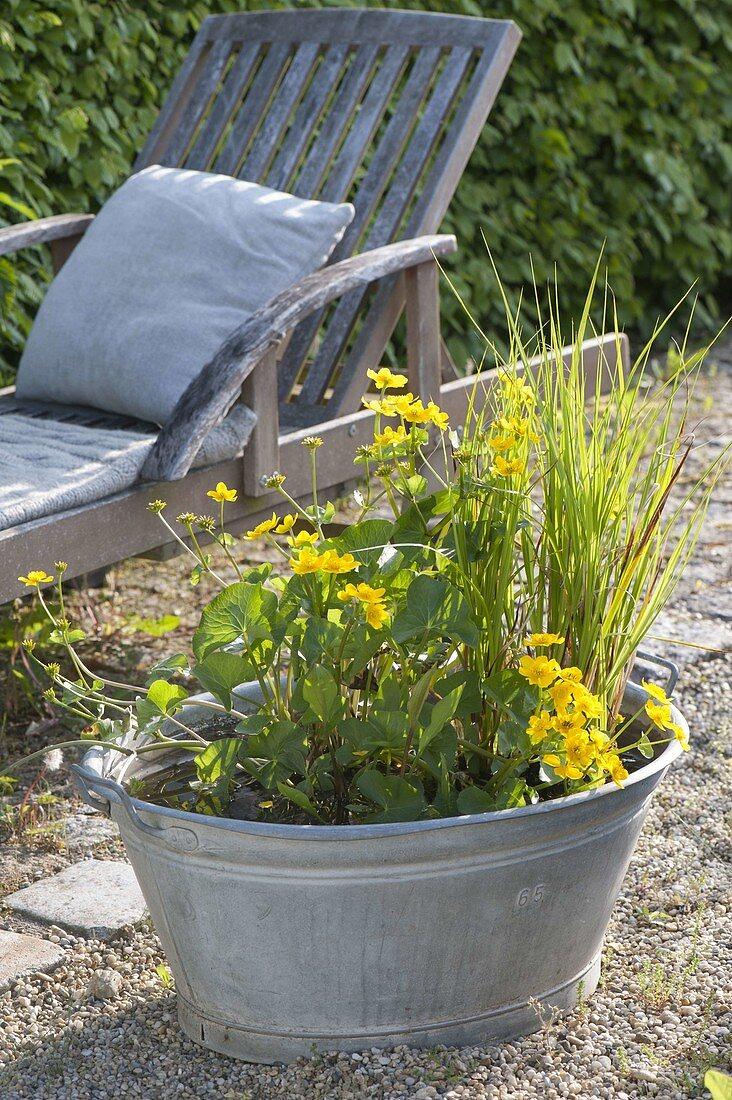 Zinc trough as mini pond on gravel terrace, Caltha palustris
