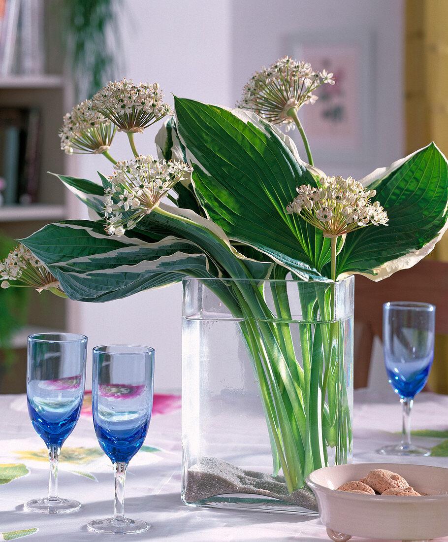Allium nigrum (Ornamental), Hosta (Funkia leaves)