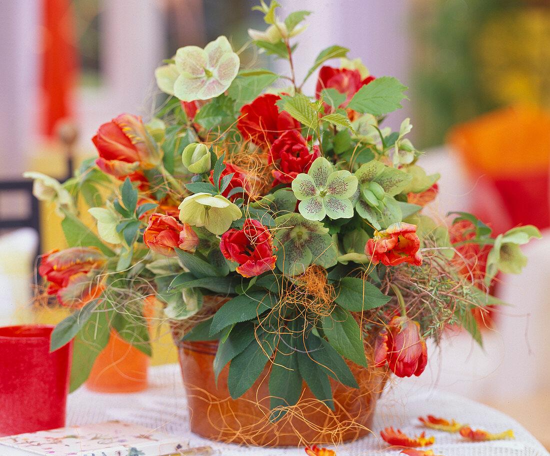 Bouquet of Tulipa 'Arma', Helleborus orientalis (Lenzrose)