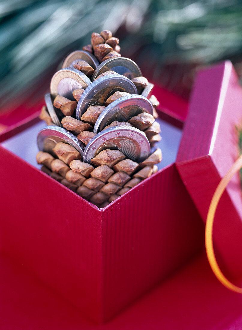 Pinus pinea (pine), pine cones as a gift of money