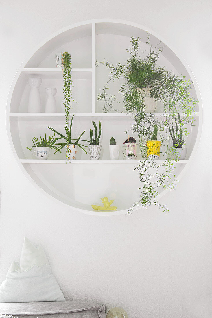 Houseplants on round wall-mounted shelves