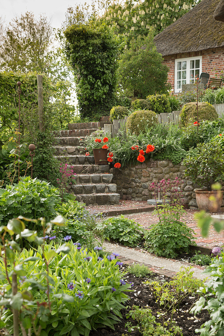 Stone steps leading to thatched house in May garden (East Frisia, northern Germany)