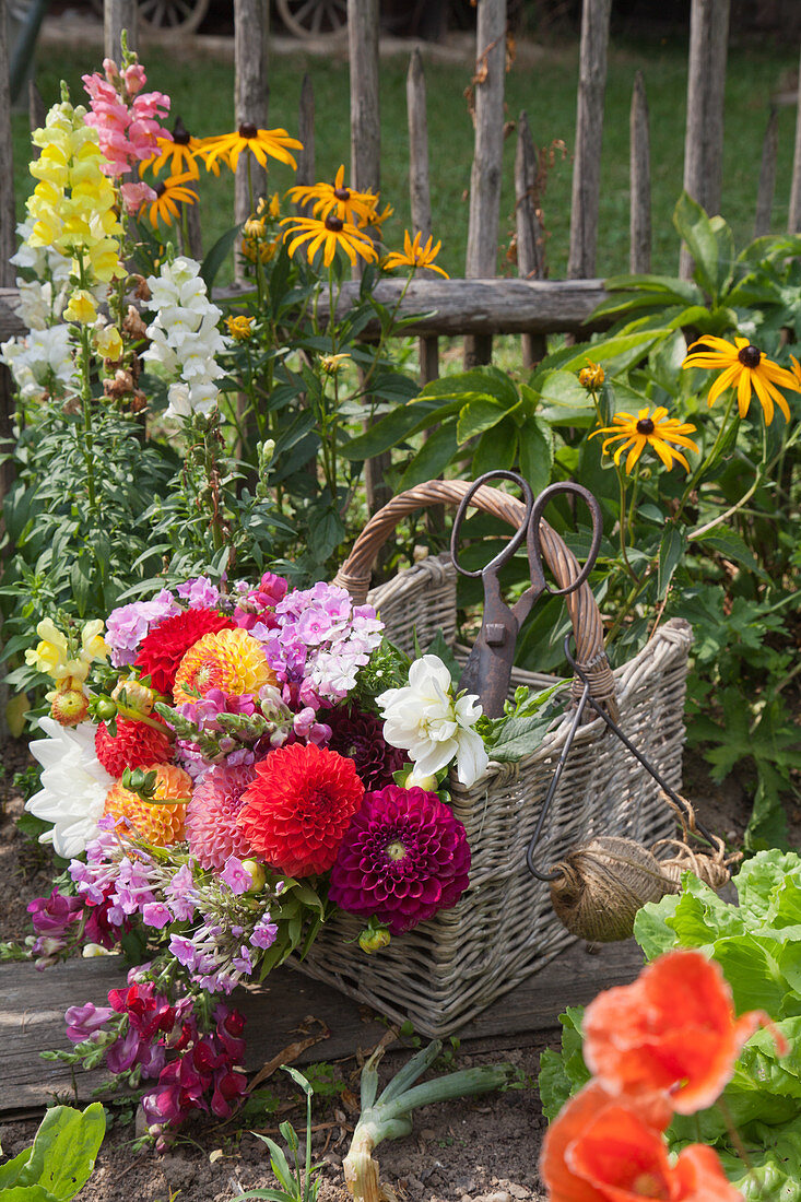 Basket of pompon dahlias, phlox and snapdragons