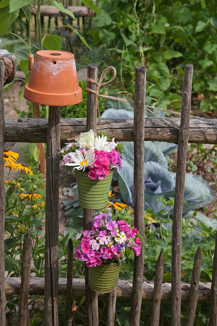 Ox-eye daisies and phlox in flowerpots hung from garden fence