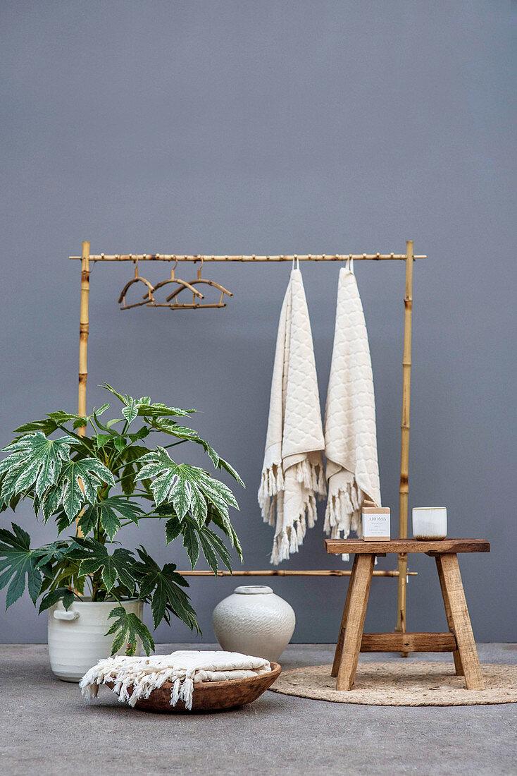 Zimmeraralie und Garderobenständer aus Bambus vor grauer Wand