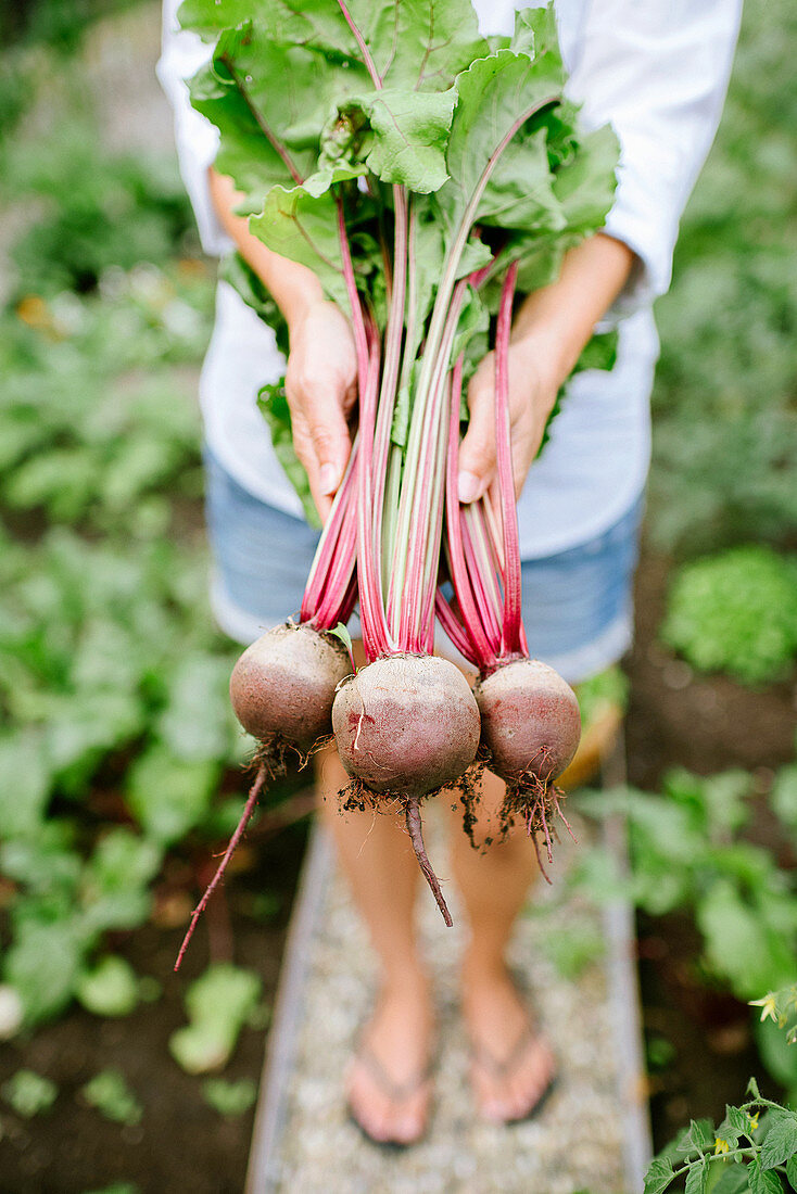 Woman holding freshly picked beetroot
