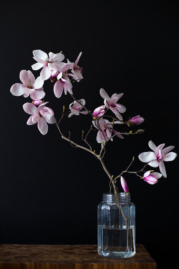 Magnolienzweig im Wasserglas