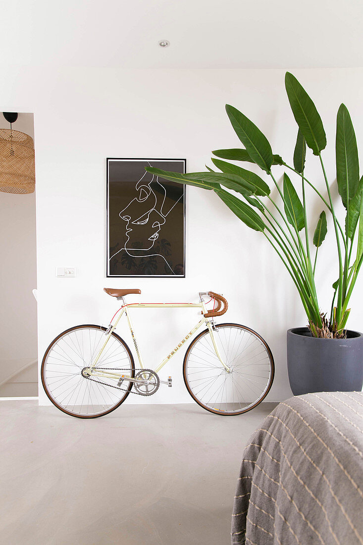 Bicycles and giant bird of paradise plant in simple bedroom