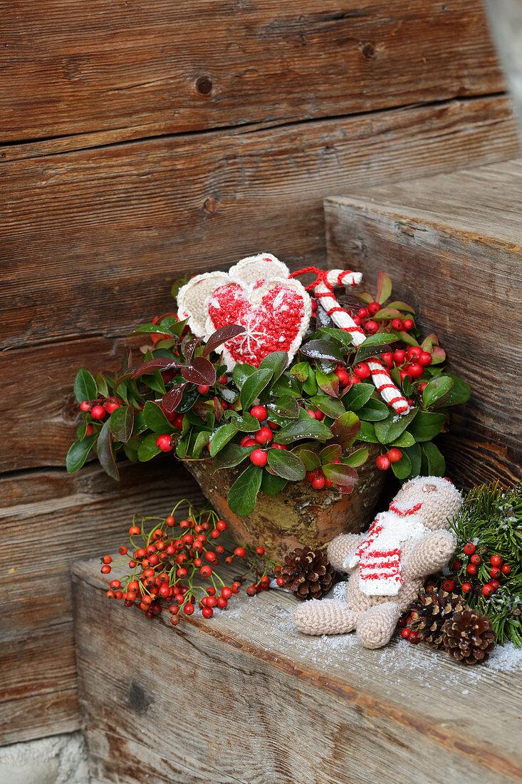 Scheinbeere weihnachtlich dekoriert