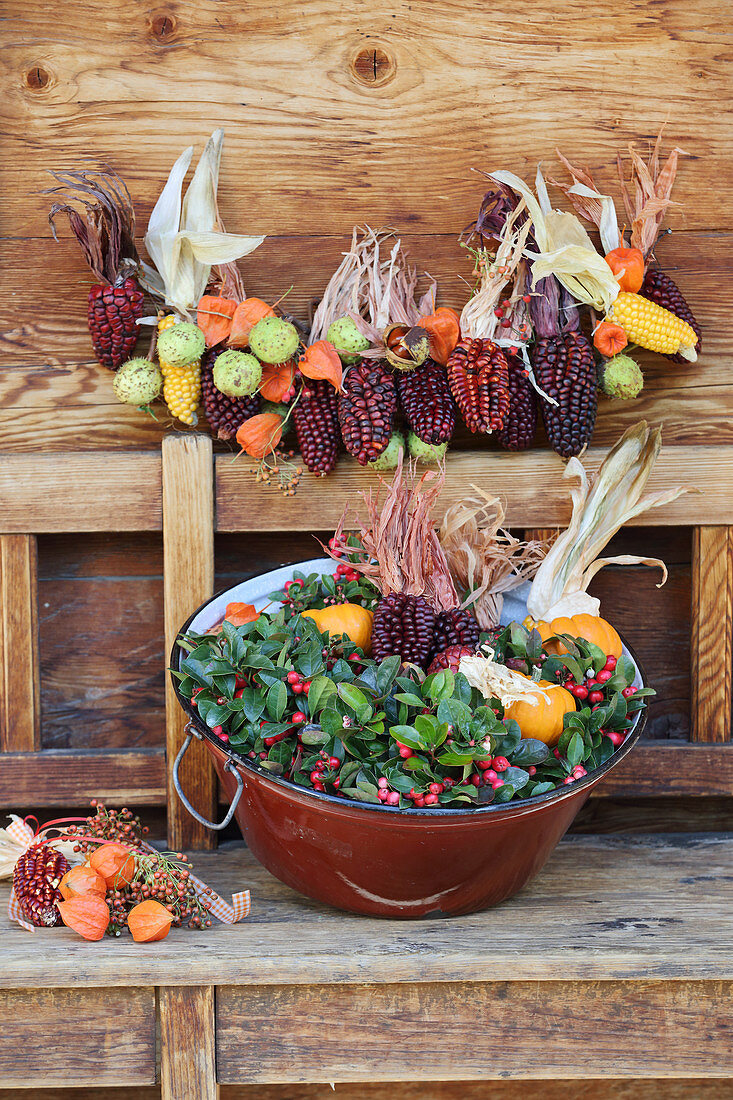 Garland of multicoloured corncobs, chestnuts and physalis, Gaultheria and pumpkins in tub