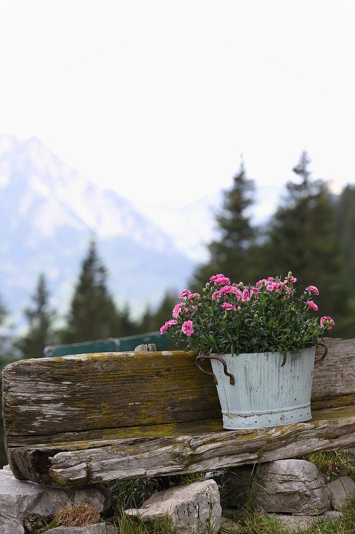 Blühende Nelken in Blumentopf vor Berglandschaft